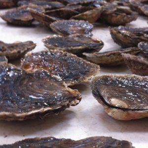 Limfjordsøsters® 50 stk. Str. A - Webshop - Glyngøre Shellfish